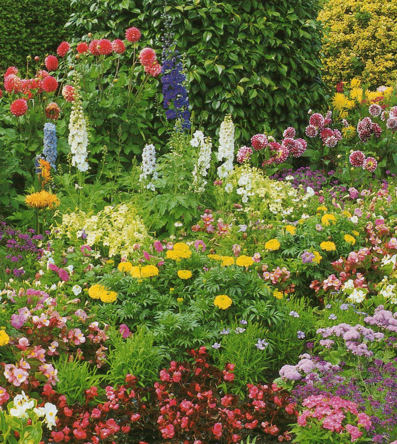 Flower Garden Ideas Plants Photograph | over. A garden full