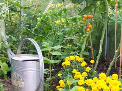 greenhouse-companion