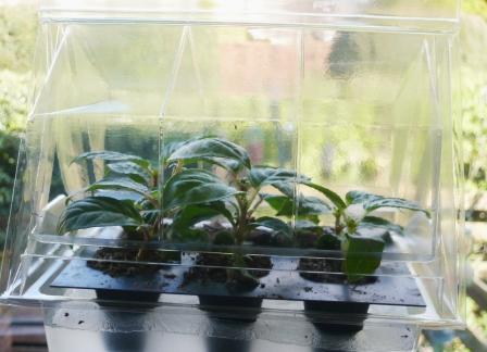 micro-greenhouse