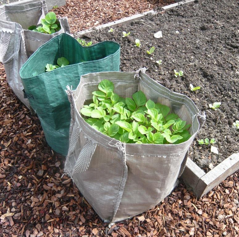 potato-sacks
