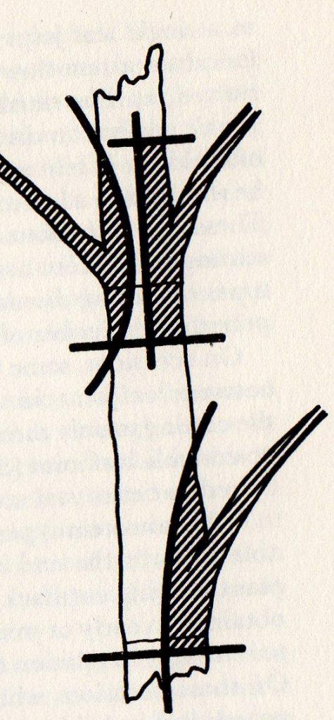 Leaf Axil cutting