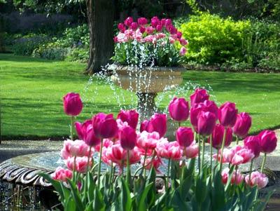 Tulips Fountain