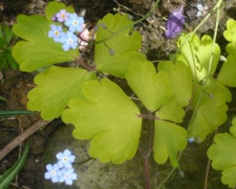 aqu-leaf