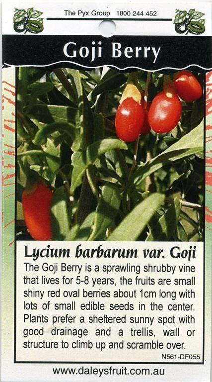 Different Fruit Goji And Honey Berry Gardeners Tips