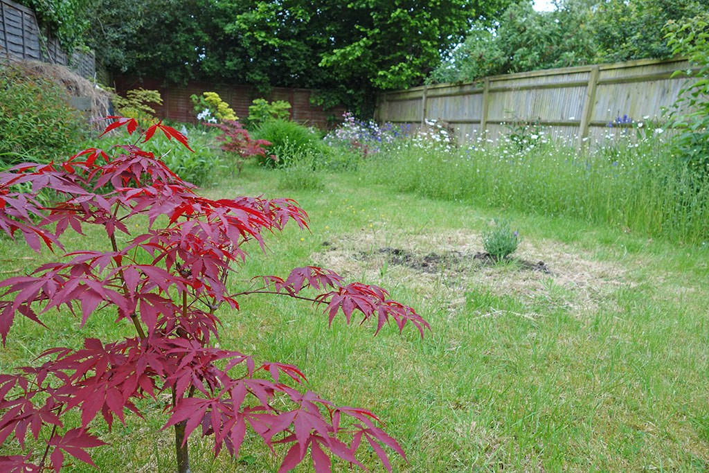 Acer Palmatum U2013 A Great Tree For Small Gardens. They Are Very Slow Growing  So Stay Nice And Small. Iu0027ve Found They Can Be A Bit Tender In A Cold Windy  ...